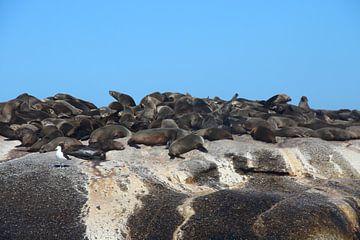 Seelöwen auf Felsen von Quinta Dijk