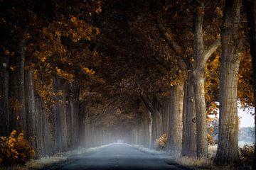Lonely Road van Kees van Dongen