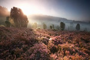 foggy sunrise over hills with flowering heather