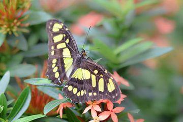 Bunter Schmetterling auf Blumen von Kim de Been