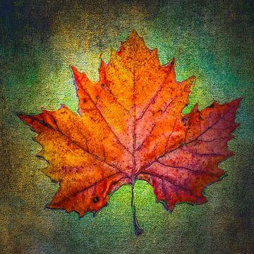 Herfstblad op groen van Freddy Hoevers