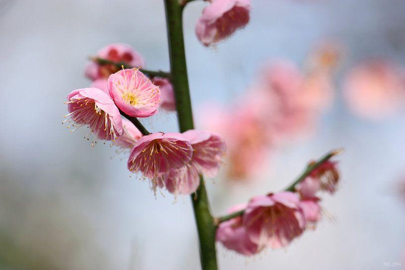 Frühling sur Meleah Fotografie
