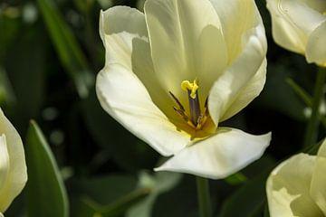 Witte bloem van Chris Snoek