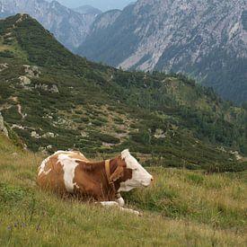 Rustende koe van Rinke Velds