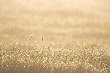 Perlen im Gras von Bas Ronteltap