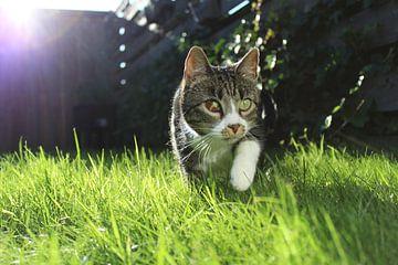 Junge Katze im Gras von Elisabeth Eisbach