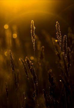 WEEDS sur Ans de Bie