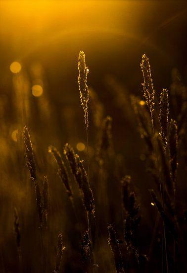 WEEDS van Ans de Bie