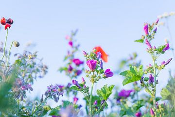 Wilde Sommerblumen 10 von FotoDennis.com