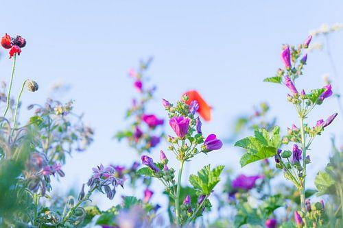 Wilde Zomer Bloemen 10