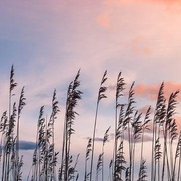 Schilfrohr-Federn Silhouetten von Jefra Creations