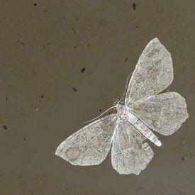 Natte vleugels van Douwe Schut