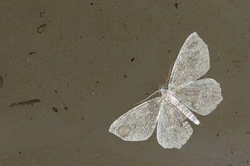 Natte vleugels von Douwe Schut