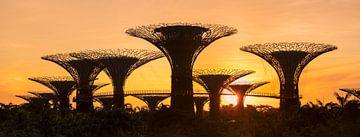 Supertrees bei Sonnenaufgang, Gardens by the Bay, Singapur City, Singapur, Asien von Markus Lange