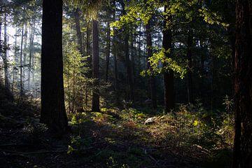 betoverd bos van Prints by Eef
