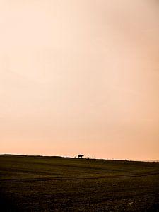 Koe van Oscar van Crimpen