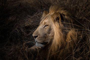 De Koning van Ruud Bakker