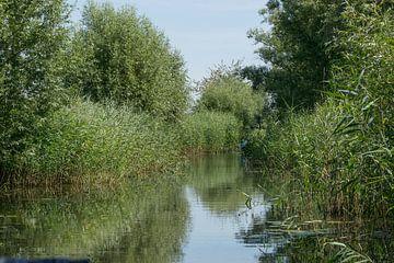 Biesbosch, wässrig mit grünen Nieten von Patrick Verhoef