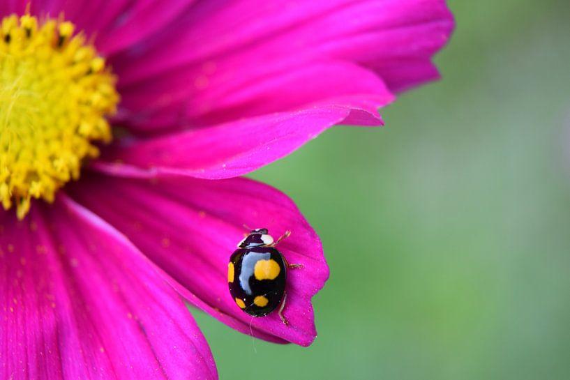 Lieveheersbeestje van Anita van Gendt