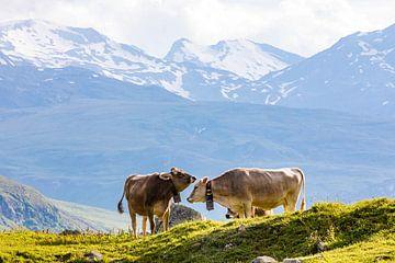 Koeien op de alpenweide in Zwitserland van Werner Dieterich