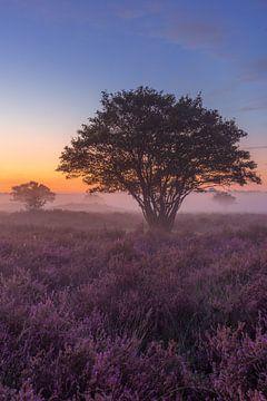 Dromerige mistige ochtend op de Zuiderheide van Michiel Dros