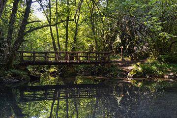 De brug in het woud sur Daphne Elderenbos
