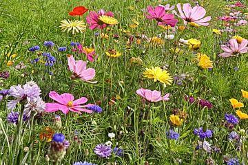 bloemenperk van Joke te Grotenhuis