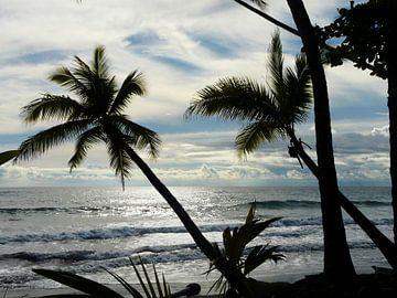Uitzicht met palmbomen en zee in Costa Rica  van Maartje Abrahams