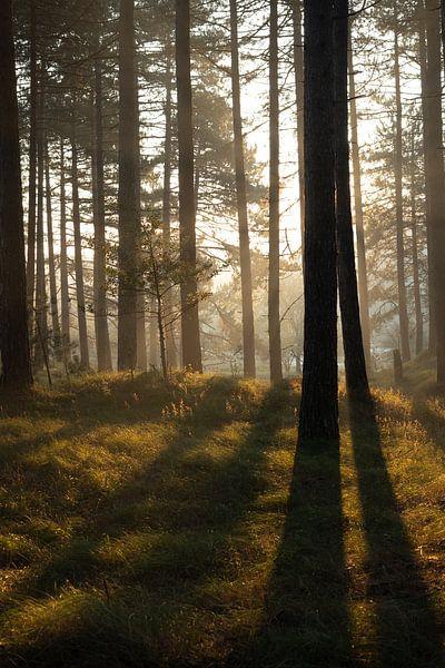 Lumière du matin à travers les arbres sur Tomas Grootveld