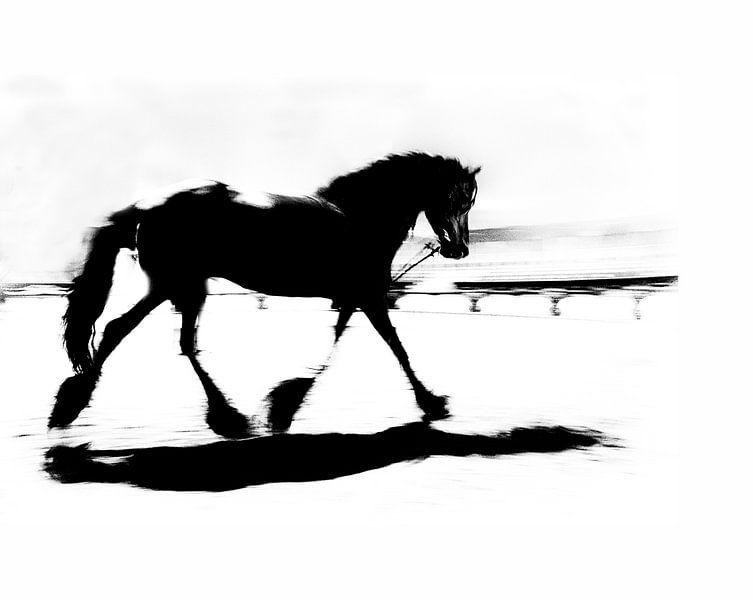 Fries paard in circus van Anouschka Hendriks