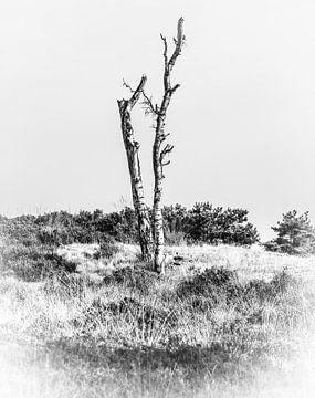 Dode berk in zwart-wit van Fotografie Jeronimo