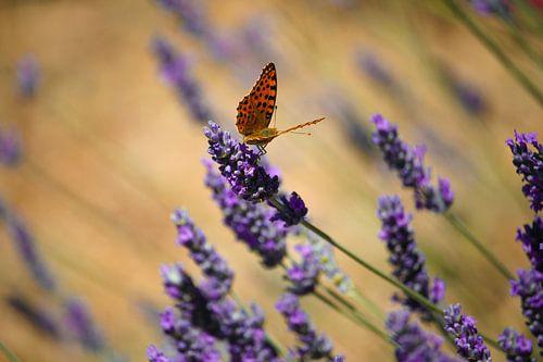 Kleurrijke wereld van de vlinder