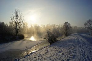 Hollandse Biesbosch in de winter