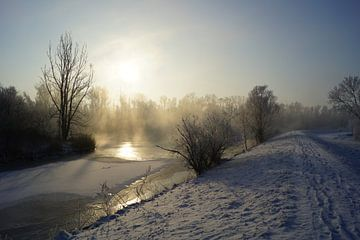 Hollandse Biesbosch in de winter van