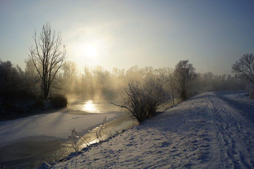 Hollandse Biesbosch in de winter van Michel van Kooten