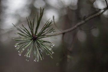 Regendruppels van Jitske Cuperus-Walstra