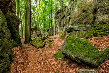 Mullerthal Trail I