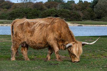 Highlands écossais sur Daan Kloeg