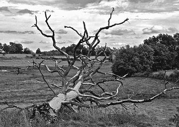 Slachtoffer van weer en wind van Artelier Gerdah