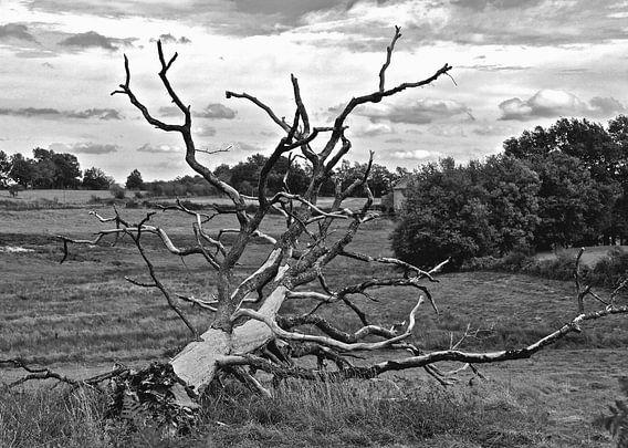 Slachtoffer van weer en wind