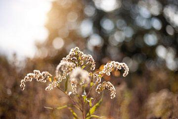 Herfst plant van Yara Verstappen