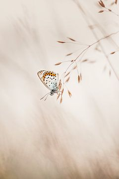 Heathcliff-Schmetterling in minimalistischer Umgebung von KB Design & Photography (Karen Brouwer)