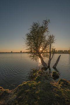 Baum im Wasser von Moetwil en van Dijk - Fotografie