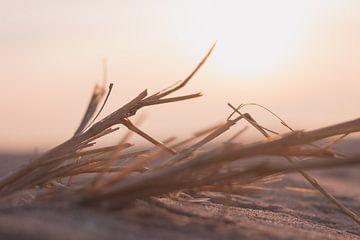 Äste im Sand während der Passage von Ben Hoedt