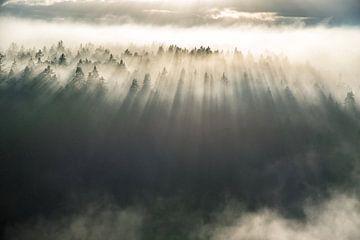 Nebel über den Bäumen von Marc Hollenberg