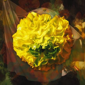 Eine gelbe Ranunkel mit einem drapierten Stoff. von Helga Blanke