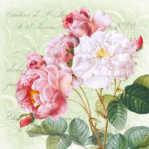Noble rose sur fond vert