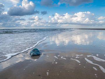 Strand in Sankt Peter-Ording met weerspiegeling van het water van Animaflora PicsStock