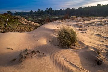 Sandverwehung bei Sonnenaufgang von Rick Kloekke