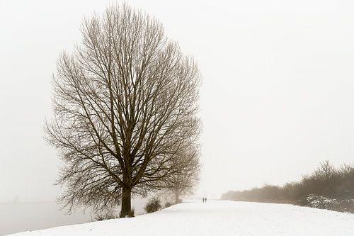 Winterwandeling langs de Maas
